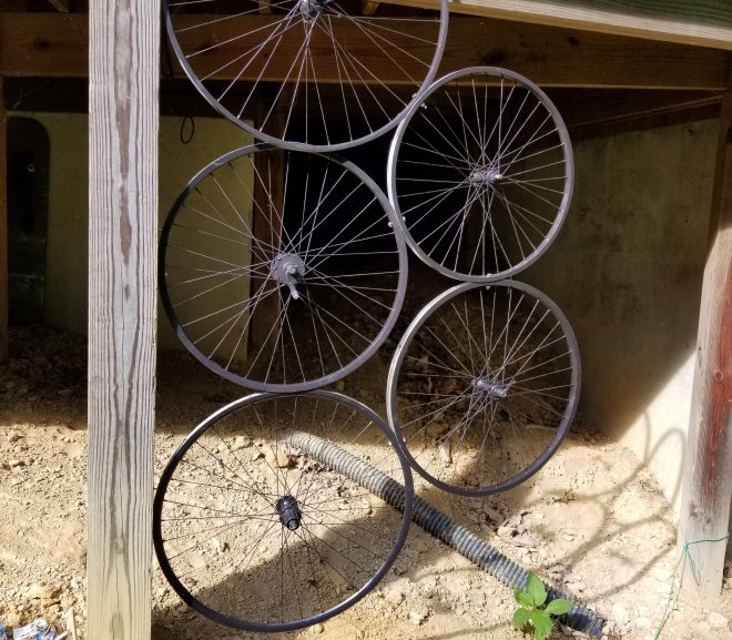 Bicycle-Wheel Trellis
